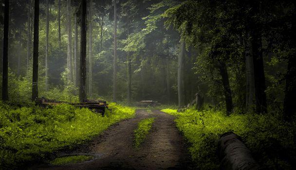 Фото бесплатно природа, лес, дорога в лесу