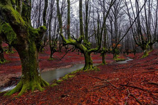 Фото бесплатно Лес, Hayedo de Otzarreta, Баскония