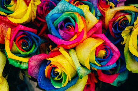 Photo free flowers, bouquet of roses, colored roses