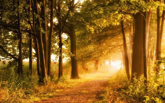 Photo free road, sun rays, landscape