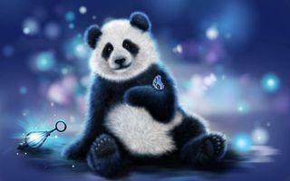 Бесплатные фото панда,бабочка,art