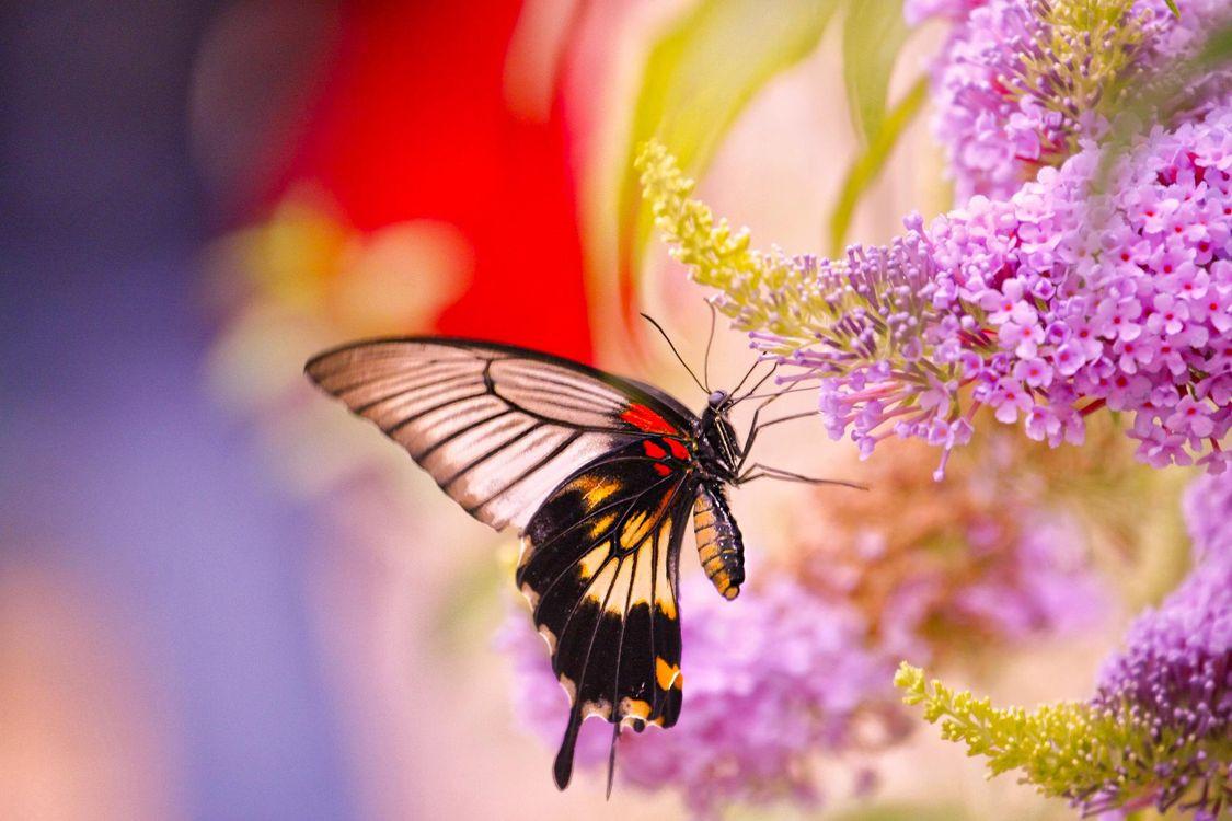 Обои цветы, бабочка, насекомое, макро картинки на телефон