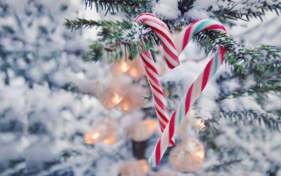 Фото бесплатно Новогодняя елка, снег, гирлянды