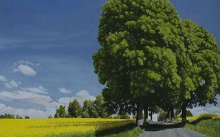 Фото бесплатно лето, дорога, обочина
