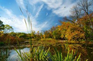 Бесплатные фото North park Village Nature Center,озеро,осень,парк,деревья,пейзаж