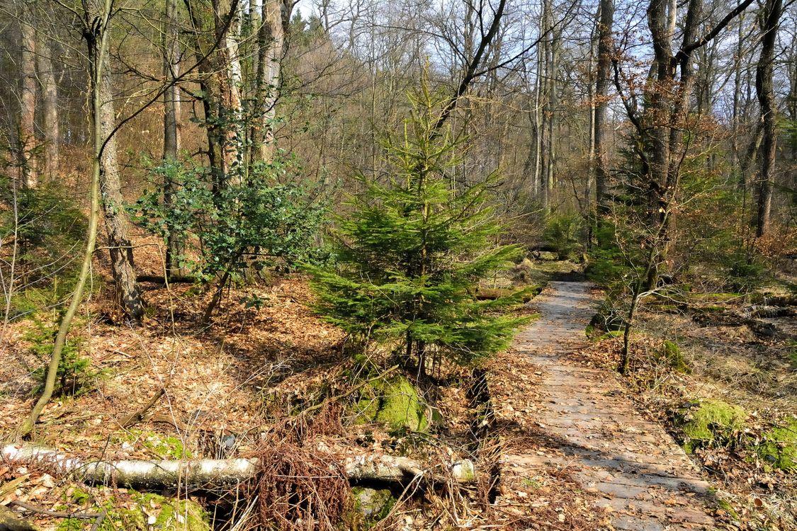Фото бесплатно лес, деревья, дорога, природа, природа - скачать на рабочий стол