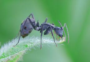 Бесплатные фото Муравей, насекомое, макро