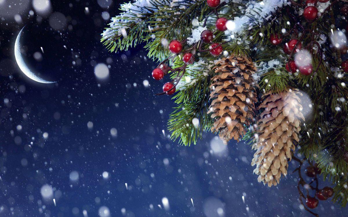 Фото бесплатно Новогодние шишки, ветки, ягоды - на рабочий стол