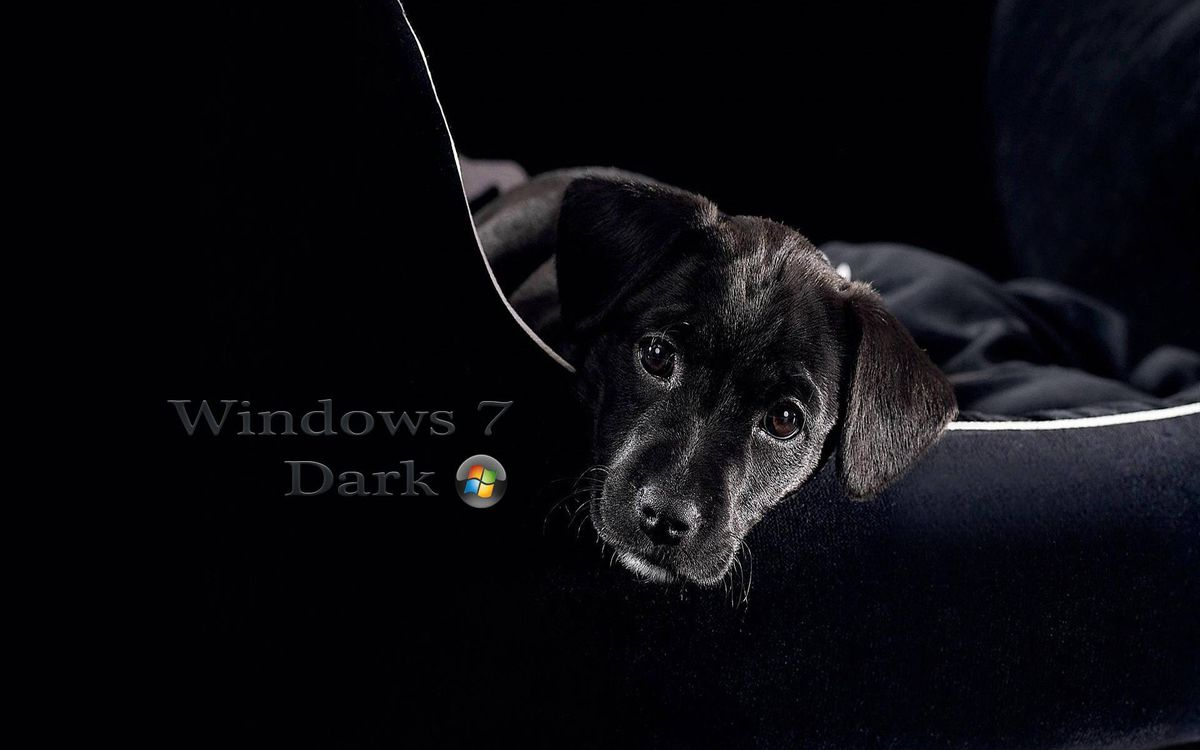 Windows 7 Dark dog · free photo