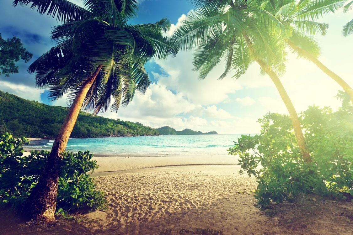 Фото бесплатно море, солнце, берег, пляж, пальмы, пейзаж, пейзажи