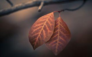 Фото бесплатно увядший лист, ветвь дерева