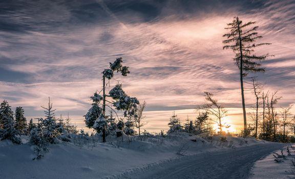 Photo free trees, snowy road, winter
