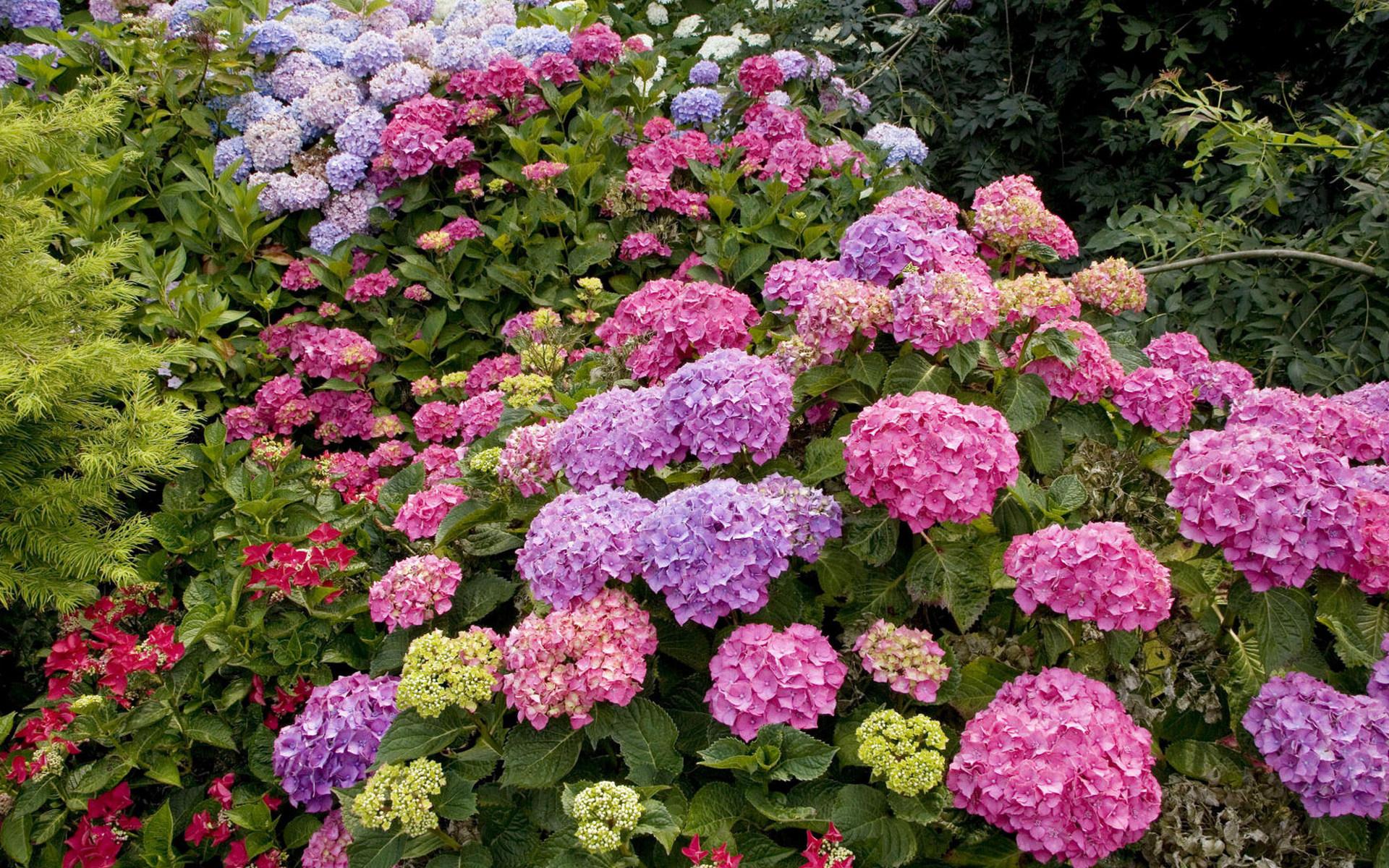 Садовые цветы кустом фото