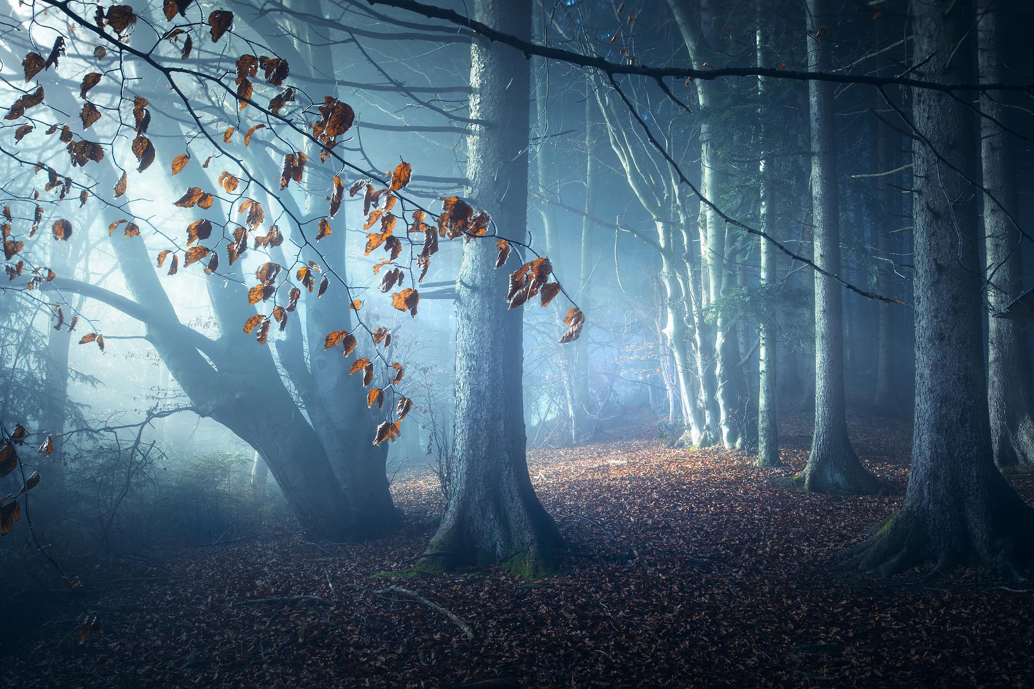 обои лес, деревья, ночь, туман картинки фото