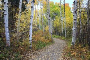 Фото бесплатно осень, дорога, лес, деревья, пейзаж