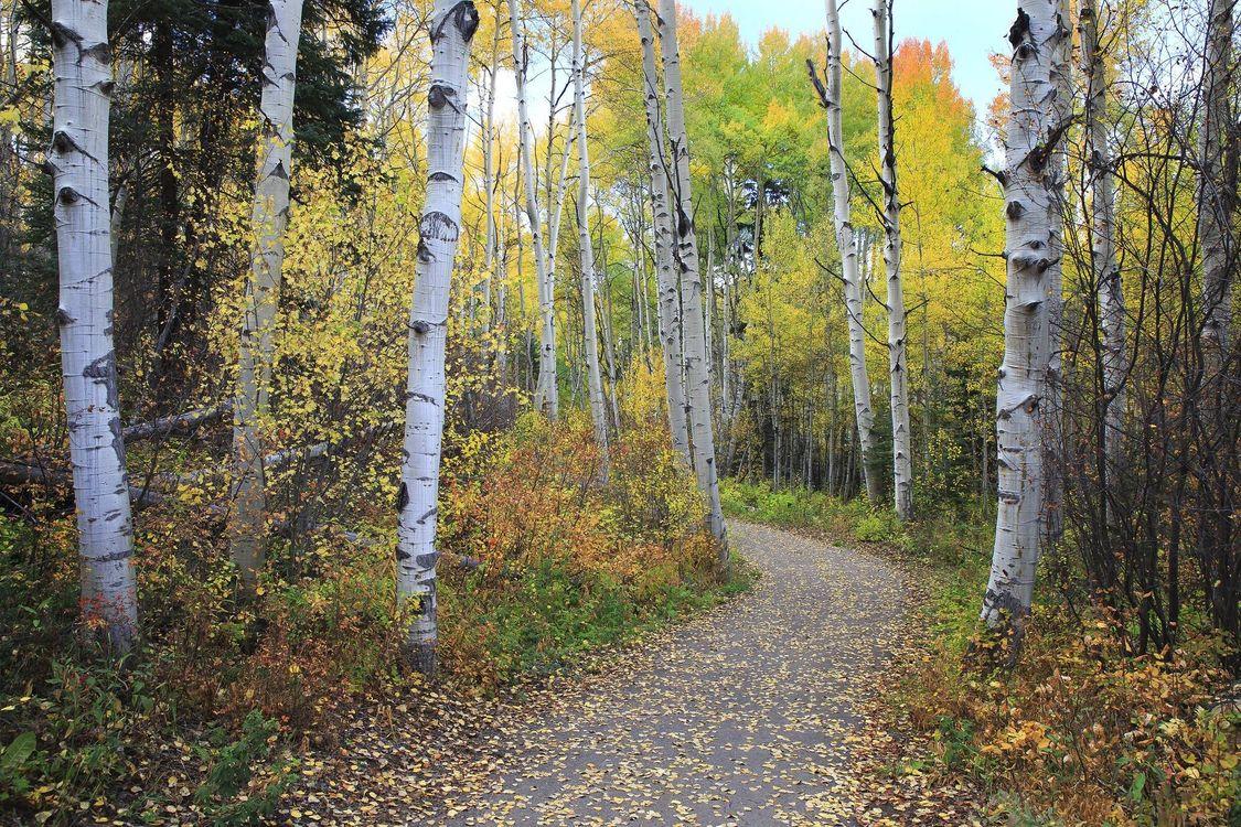 Фото бесплатно осень, дорога, лес, деревья, пейзаж, природа - скачать на рабочий стол