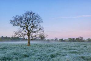 Бесплатные фото поле,дерево,туман,иней,пейзаж