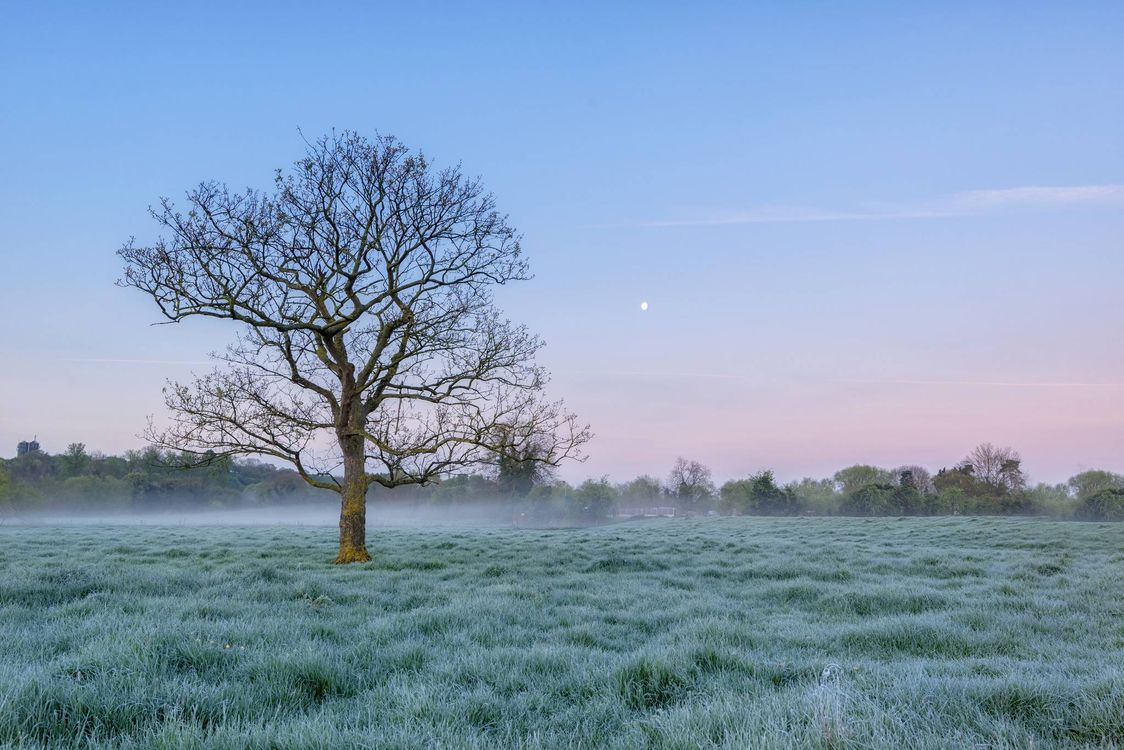 Фото бесплатно поле, дерево, туман - на рабочий стол