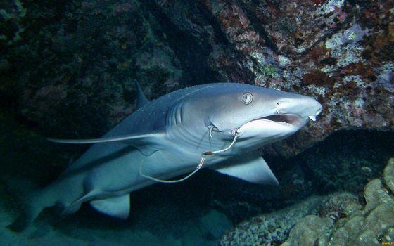 Фото бесплатно рыба, рот, крючок, жабры, плавники, риф