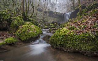 Бесплатные фото лес,деревья,речка,ручей,водопад,туман,природа