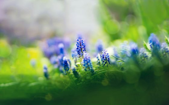 Photo free flowers, blue, bells
