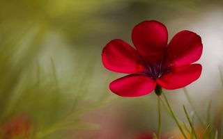 Бесплатные фото цветок,лепестки,бордовые,тычинки,стебель,трава,зеленая