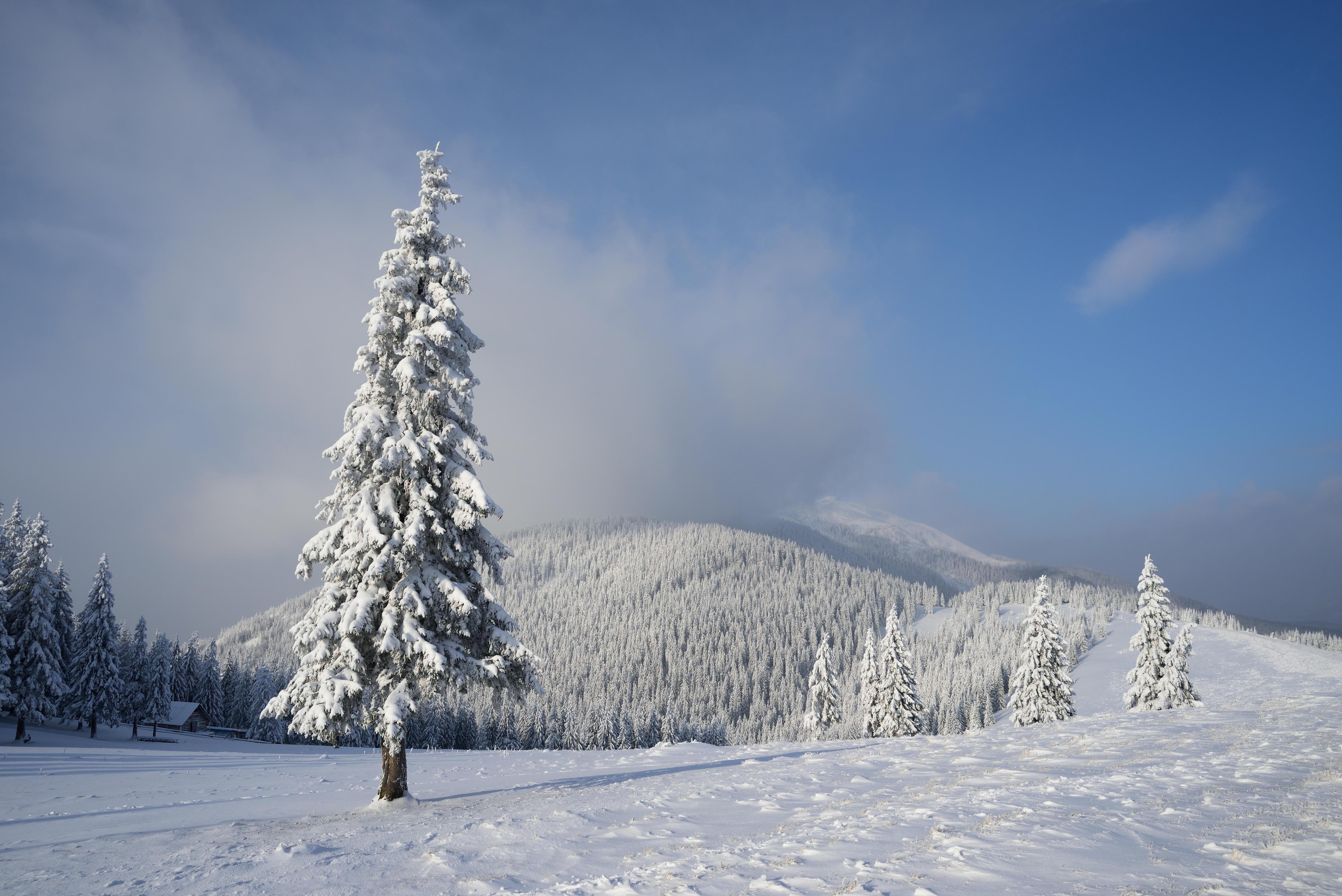 заснеженные деревья в горах  № 355922  скачать