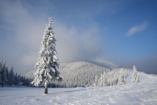 Wallpaper snow, winter desktop high quality