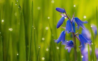 Бесплатные фото цветок,трава,капли,роса
