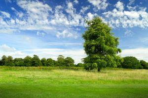 Фото бесплатно поле, деревья, пейзаж