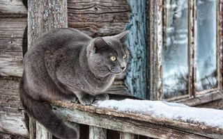 Бесплатные фото кот,серый,глаза,желтые,лапы,хвост,перила