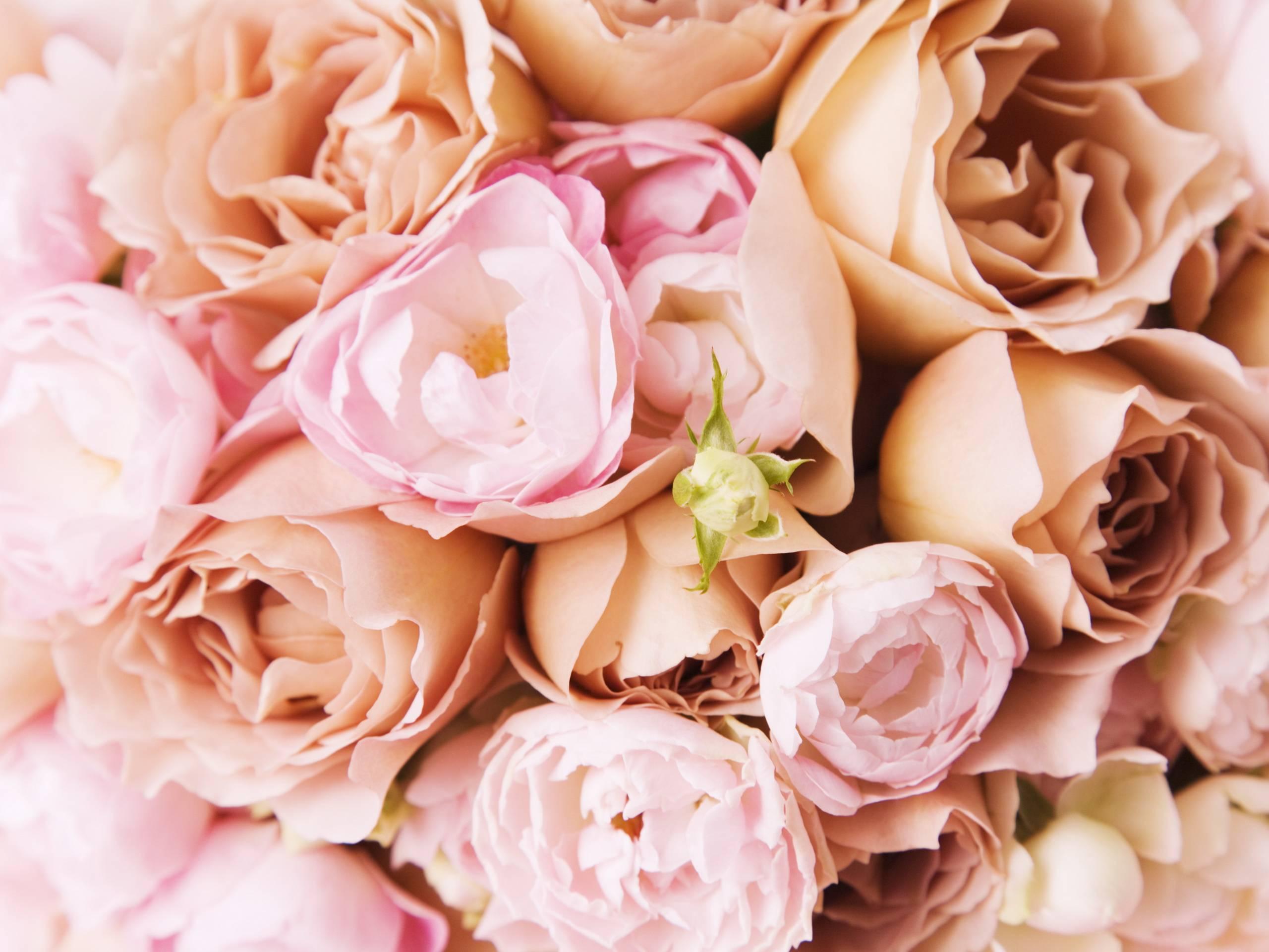 нежно-кремовые свадебные розы  № 1323035 бесплатно