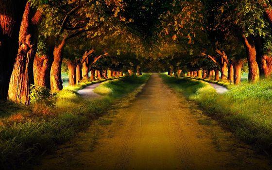 Фото бесплатно аллея, дорога, тропинки