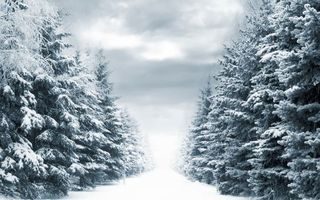 Бесплатные фото зима,дорога,деревья,лес,снег,небо