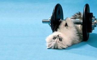 Фото бесплатно котенок, гантели, шерсть