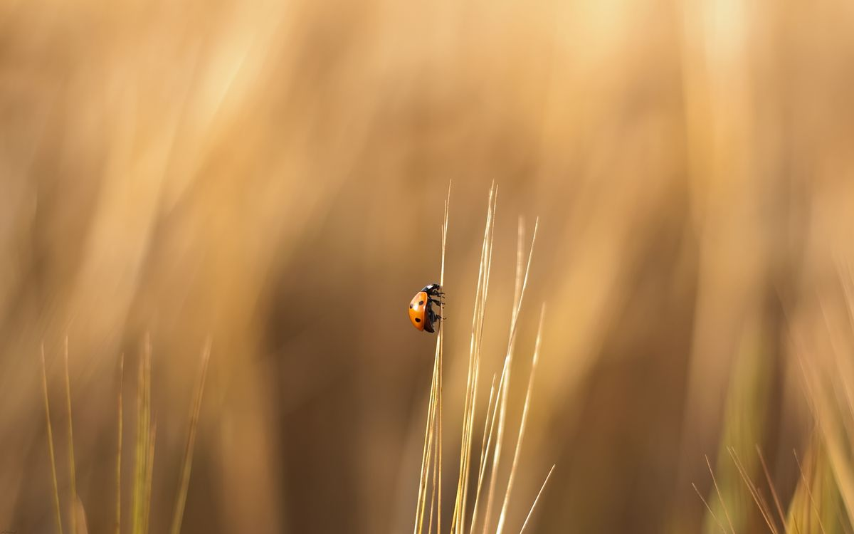 Фото бесплатно трава, стебель, божья коровка, желтая, лапки, насекомые