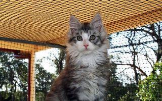 Бесплатные фото кот,пушистый,шерсть,морда,глаза,клетка