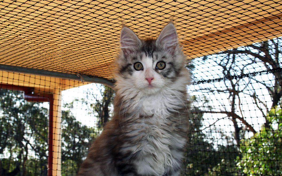 Фото бесплатно кот, пушистый, шерсть, морда, глаза, клетка, кошки