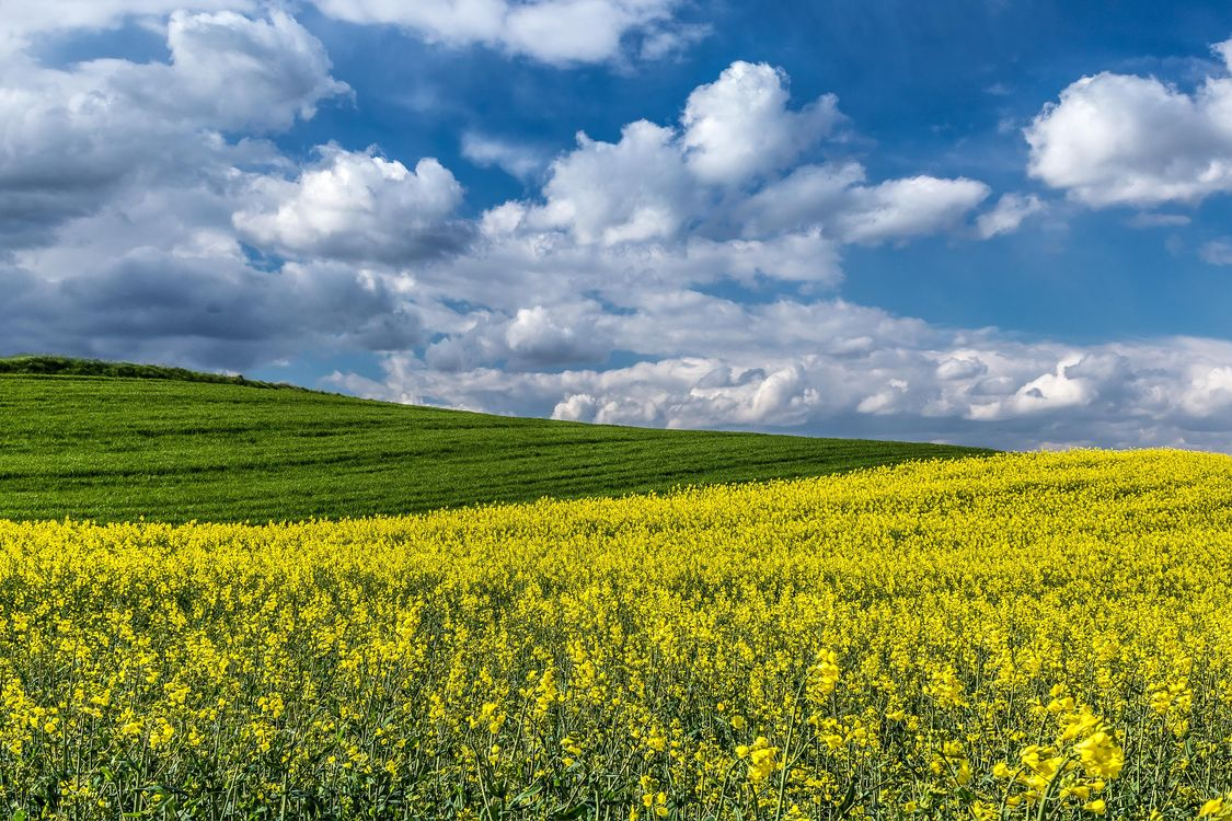 Фото бесплатно поле, холмы, цветы - на рабочий стол