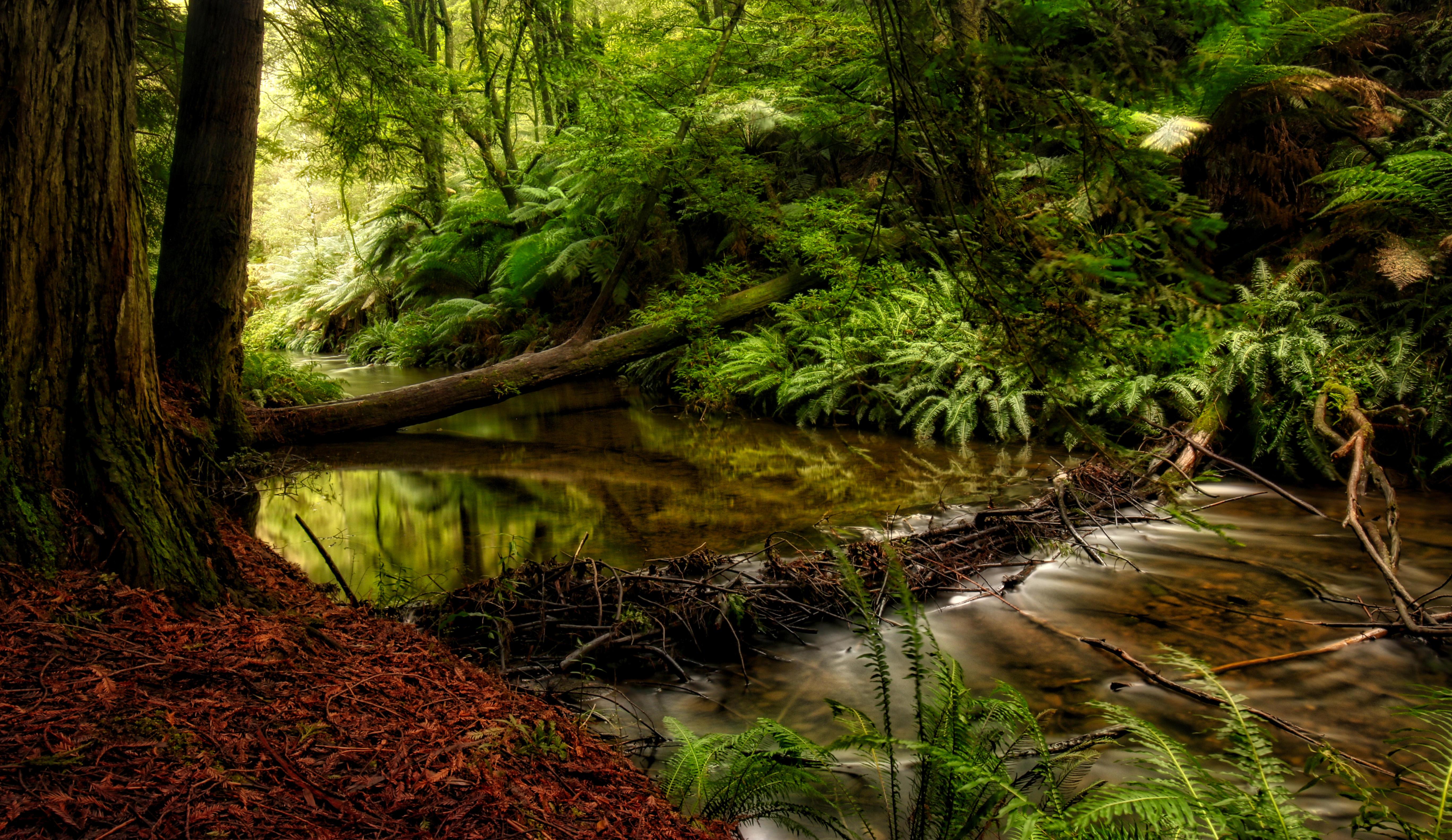 Обои река, лес, деревья, природа