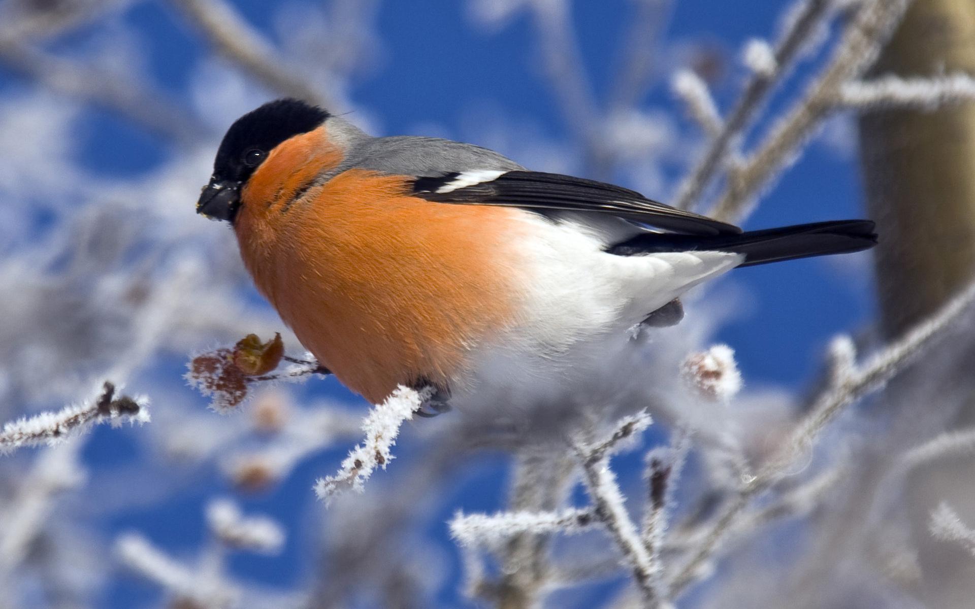 птичка на снегу без смс
