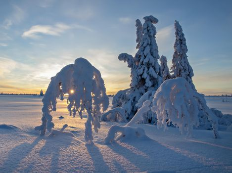 Photo free snow on trees, trees in the snow, landscapes