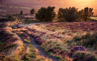 Бесплатные фото осень,трава,тропа,просторы,закат