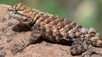 Фото бесплатно ящерица, морда, лапы