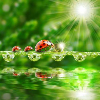 Фото бесплатно зелень, роса, насекомые