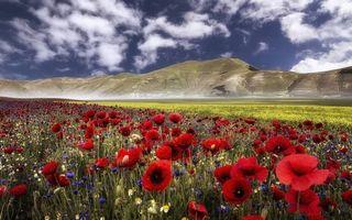 Бесплатные фото долина,маки,ромашки,трава,горы,небо,облака