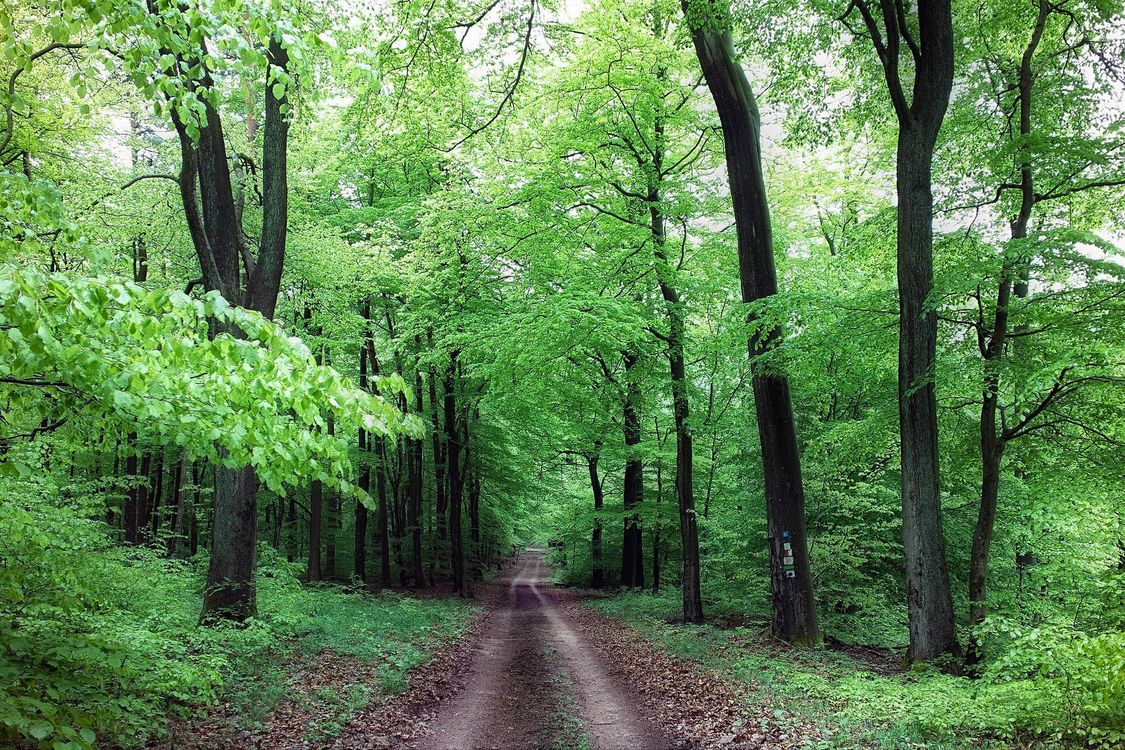 Фото бесплатно лес, деревья, дорога, природа, природа