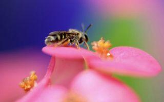 Фото бесплатно цветок, лепестки, пчела