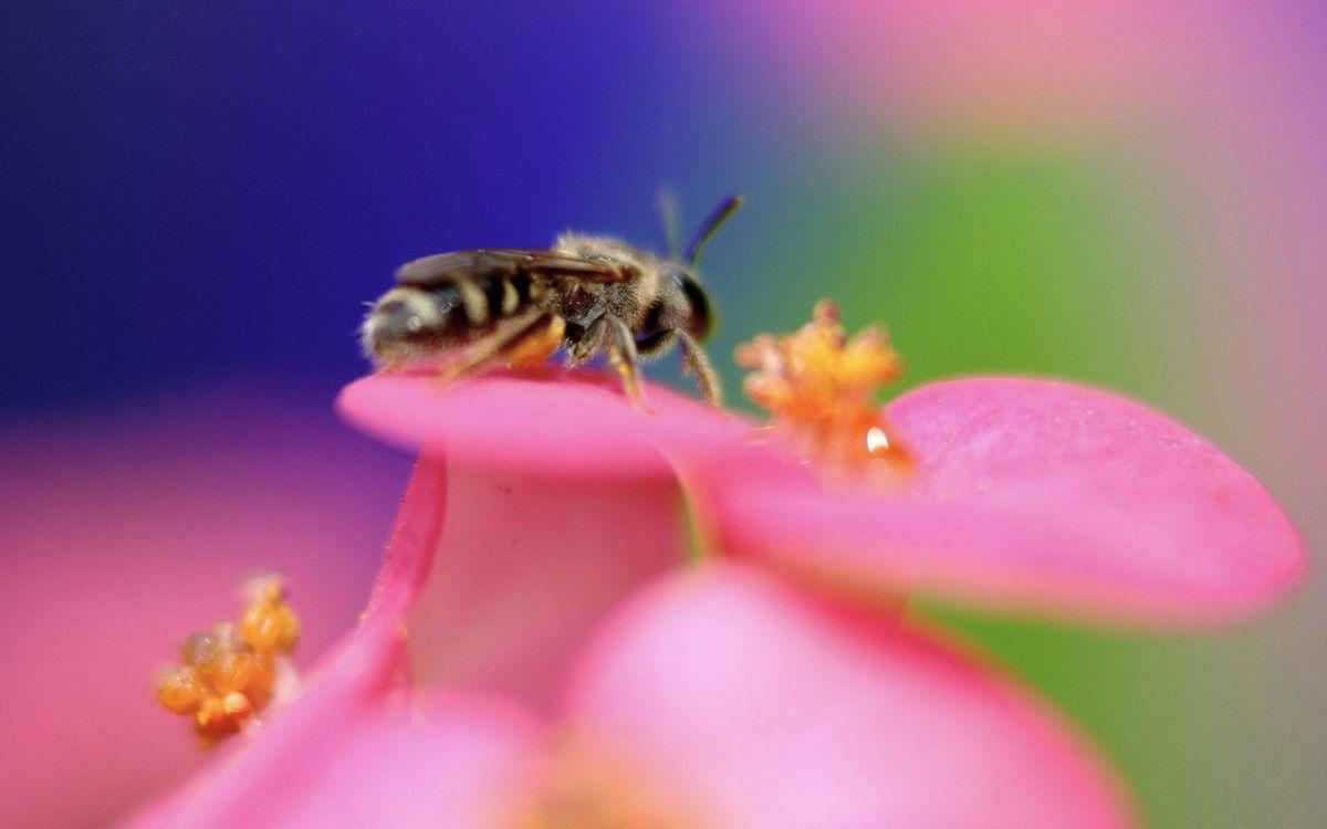 Фото бесплатно цветок, лепестки, пчела - на рабочий стол