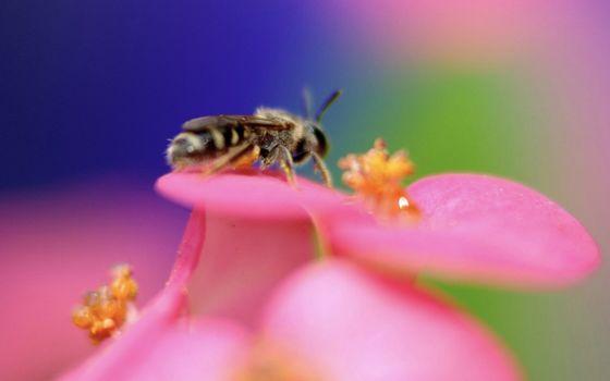 Photo free flower, petals, bee